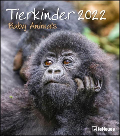Tierkinder 2022 - Wand-Kalender - 30x34 -
