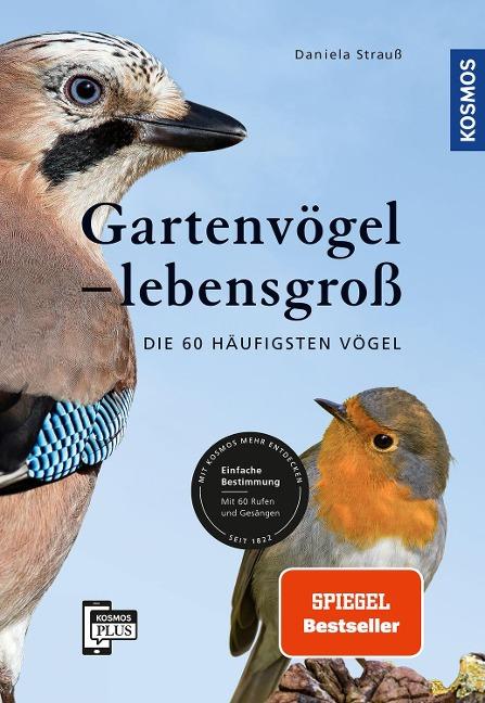 Gartenvögel lebensgroß - Daniela Strauß